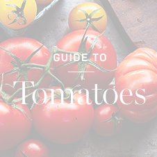 Guide to Tomatoes >
