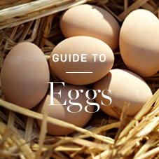 Guide to Eggs >