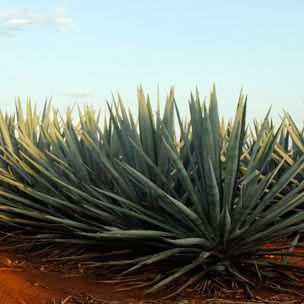 The Tequila Story