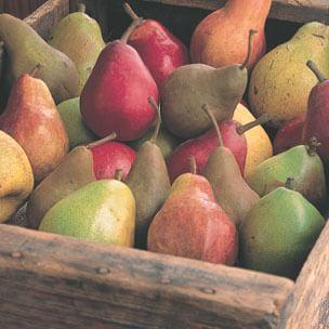 Pear Glossary