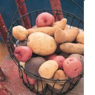 Potato Glossary