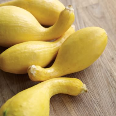 All About Summer Squash