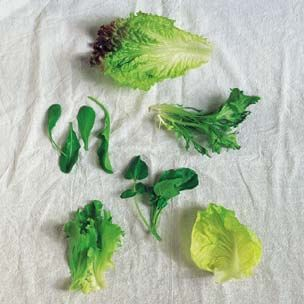 Glossary of Spring Greens