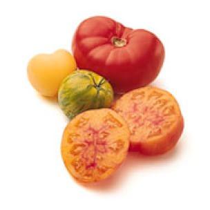 Tomato Glossary
