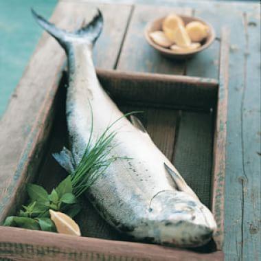 Fish Glossary