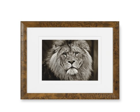Safari Animals with Burled Wood Frame, Lion
