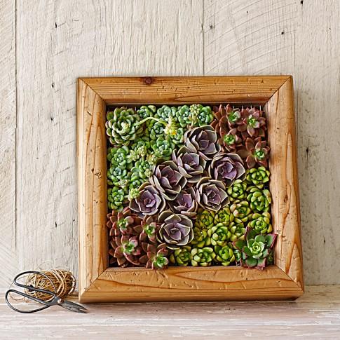 Succulent Distressed Cedar Box
