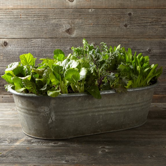 Vintage Galvanized Bathtub Planter