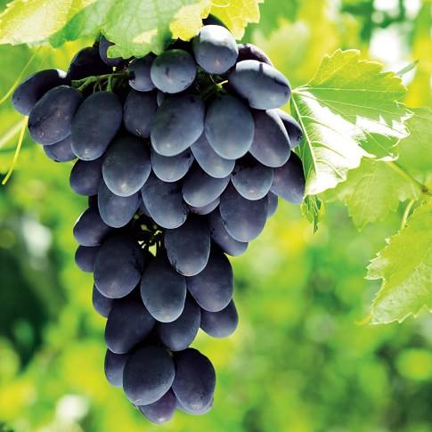 Grape Vine, Mars