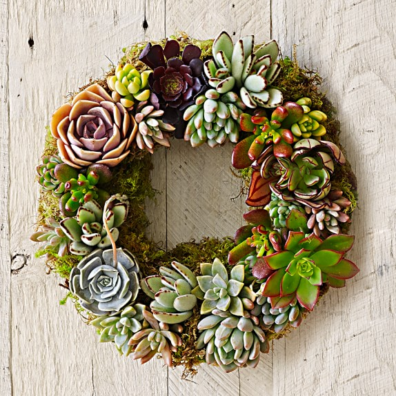 Mixed Succulent Wreath, 12