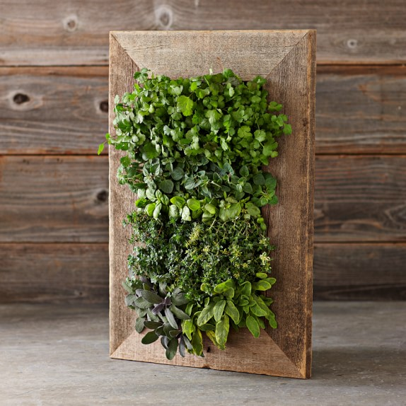 Reclaimed Wood Wall Planter Williams Sonoma