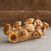 Shiitake Mushroom Log