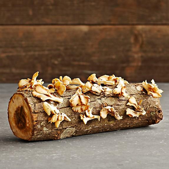 Oyster Mushroom Log