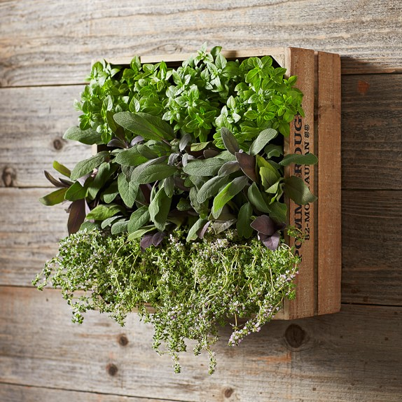 Wine crate vertical planter williams sonoma for Sonoma garden designs
