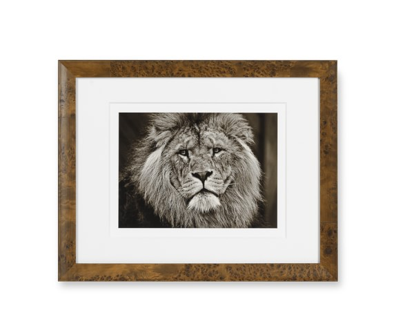 Safari Animals with Burled Wood Frame, Lion