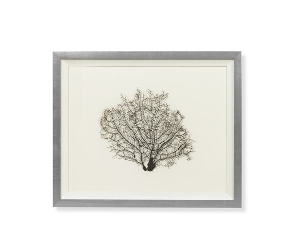 Delicate Coral Shadowbox, Small