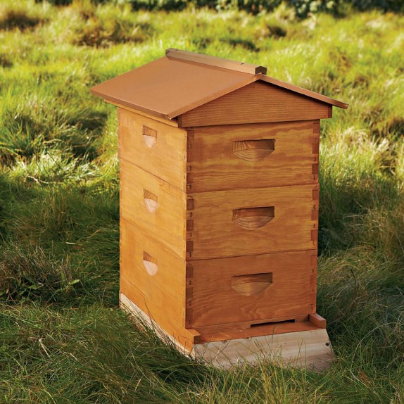 Backyard Beehive & Starter Kit