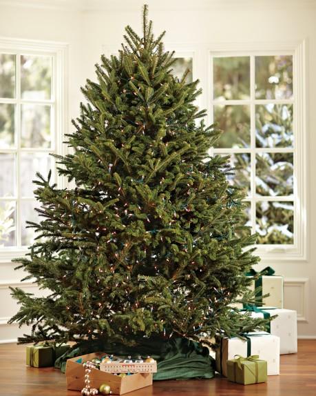 Fresh Blue Ridge Mountain Christmas Tree, 6' - 7', Nov. 8 – Nov. 16